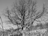 El Gobierno tala de raíz el árbol de laciencia